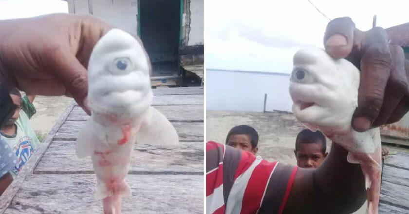 """Pescadores encuentran un tiburón albino y cíclope. """"En 30 años, jamás vi algo igual""""."""