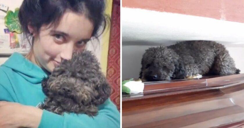 Murió hace 4 años, pero su perro no se resigna. Se abraza a su ataúd hasta que dejan el cementerio.