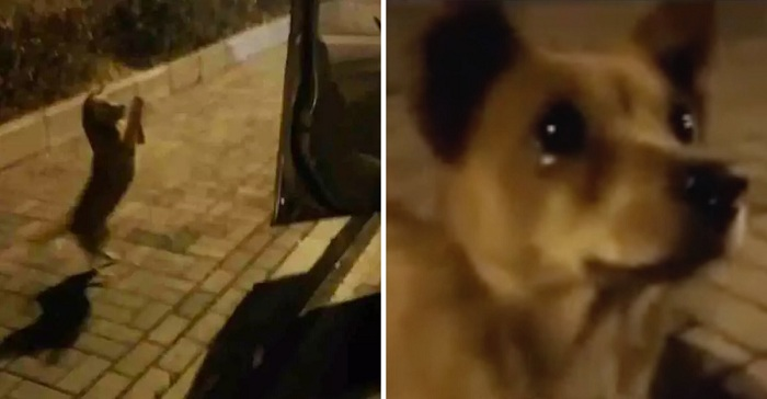Un perrito callejero llora de alegría después de que una mujer generosa le diera de comer.