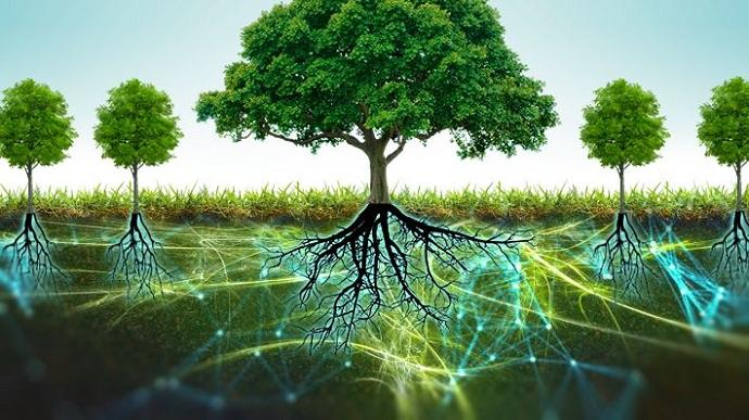 Científicos descubren que los árboles tienen sentimientos y un corazón que late.