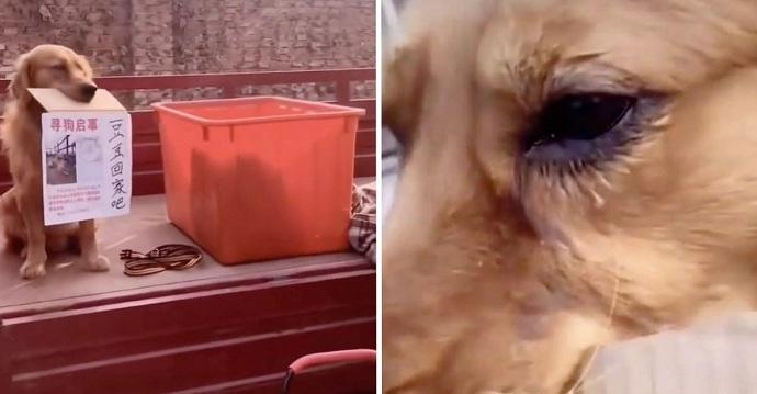 """Un perrito """"llora"""" suplicando que le devuelvan a su amigo secuestrado."""