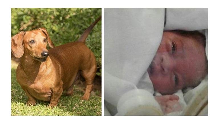 Un perro encuentra un bebé abandonado en una alcantarilla. ¡Un héroe!