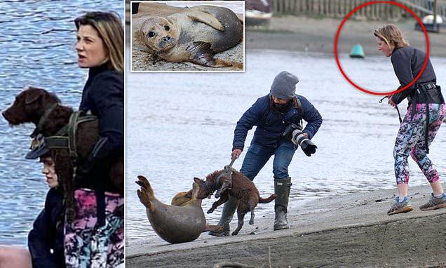 Una foca muere por el feroz ataque de un perro a orillas del río Támesis.