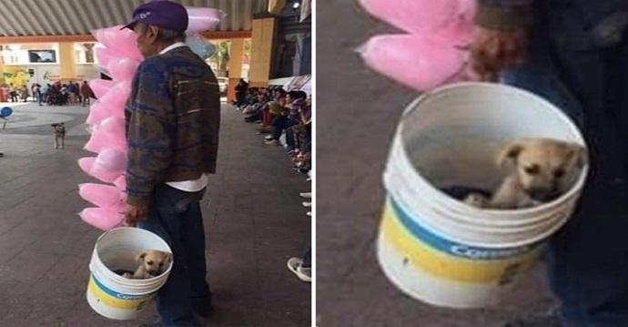 Vende algodones de azúcar, acompañado de su cachorro instalado en un balde.