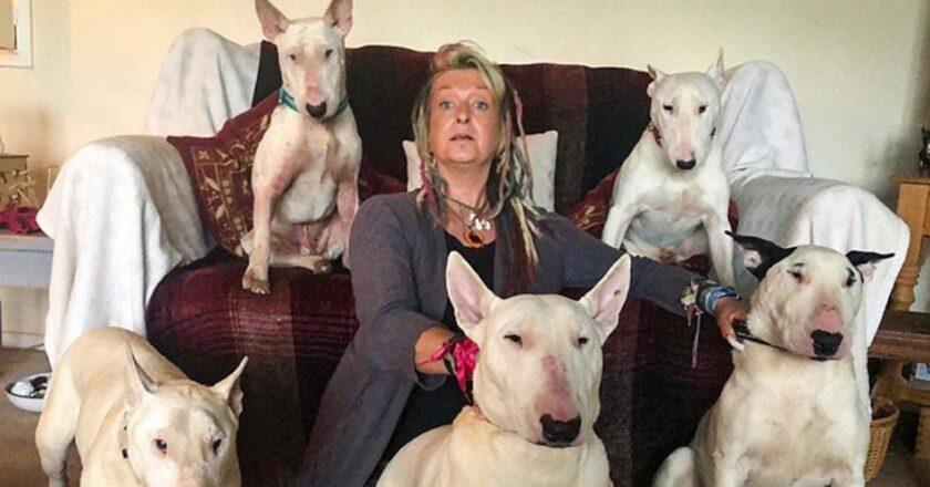 Marido obligó a su mujer a elegir entre él y los perros. Eligió a los perros.